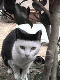 加工した画像なのか?そのくらいへんてこ模様な猫